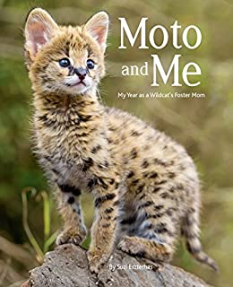 Book Cover: Moto and Me: My Year as a Wildcat's Foster Mom