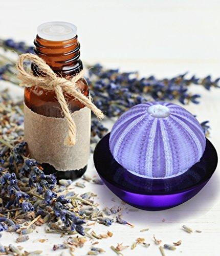 SeaThingz Flameless Candles - Real Sea Urchin Night Light - w/ Bonus Bottle of Lavender Essential Oil - LED Battery Operated Tealight for Elegant Coastal Home Decor