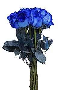 Fresh Cut Tinted Blue Roses from Flower Explosion