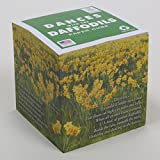 """Daffodils Note Cube, Wordsworth POEM (paper 60# weight) with 700 white tear-off pages NOT LOOSE PAGES, NOT STICKY, Made in USA (paper US or Canada) 100% Recycled 3.5"""" x 3.5"""" x 3.5"""""""
