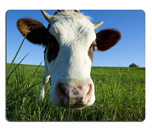 msd-natural-rubber-mousepad-brown-holstein-cow-in-the-field-looking-at-you-image-21504659