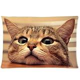 Cute kitten lovely cat Zippered Pillowcase, Twin Sides Pillowcase Pillow Cover 20x30 inches