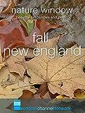 Fall New England, Nature Window