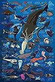 300ピース ジグソーパズル めざせ! パズルの達人 深海生物図鑑 水深1000m~4000m(26x38cm)