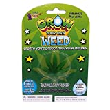 Forum Novelties Grow Your Own Weed Plant Leaf (Color: Weed, Tamaño: One Size)