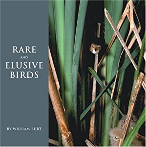 Rare and Elusive Birds of North America William Burt