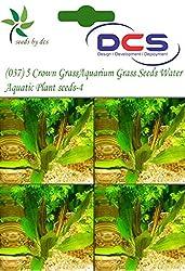 DCS(037) 5 Crown Grass Aquarium Grass Seeds Water Aquatic Plant Seeds-4