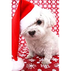 A Maltese Dog Dressed Up for Christmas: Blank 150 page lined journal for your thoughts, ideas, and inspiration