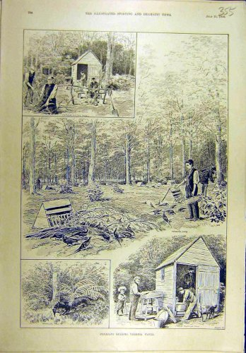 1894 Pheasant Shooting Virginia-Water Sport Print