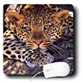3dRose LLC 8 x 8 x 0.25 Inches Mouse Pad, Leopard (mp_512_1)