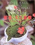 苔玉・ミニ盆栽—おしゃれでかわいい緑のインテリア
