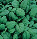 Search : Spinach Space D644A (Green) 500 Hybrid Seeds by David's Garden Seeds