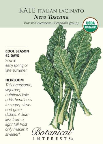 Kale Italian Lacinato Nero Toscana Certified Organic Seeds