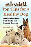 Top Tips for a Healthy Dog