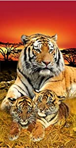 Bengal towel tiger family life of pi wonder for Life of pi family