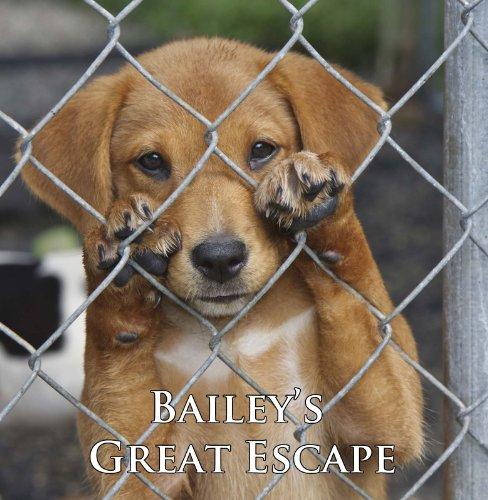 baileys-great-escape-a-cute-dog-story