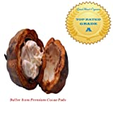 2 lbs Raw Cocoa Butter + .33oz Chocolate Fragrance Oil (Raw, Unbleached & Non-Deodorized Cacao)