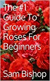 The #1 Guide To Growing Roses For Beginners