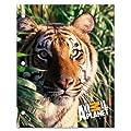 Primary Colors 9.5 x 12 Inches Animal Planet 2 Pocket Portfolio (552)