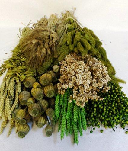pack-flores-secas-verde-portes-gratis