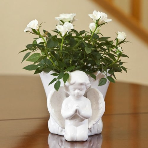 Mini White Rose in Angel Container - Beautiful Sympathy Gift - Live Plant Gift - Green Gift - Bereavement Gift - Sympathy Flowers - Ships fast via 2-Day Air