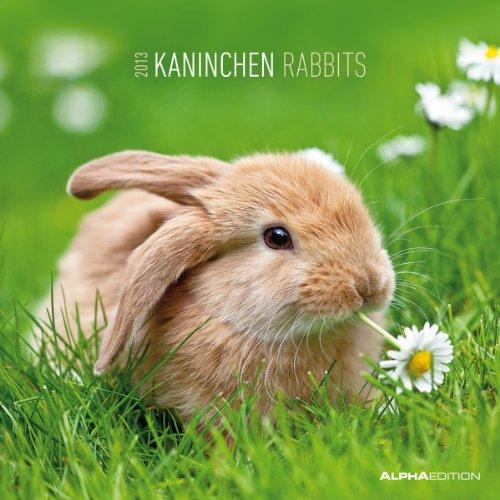 Kaninchen, Broschürenkalender 2013