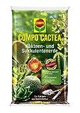 Compo 1122102004 Cactea Kakteen und Sukkulentenerde