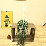 多肉植物 観葉植物:ハートカズラ*吊り鉢