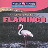 img - for The Life Cycle of a Flamingo (Things With Wings) book / textbook / text book