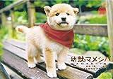 幼獣マメシバ 2010年 カレンダー