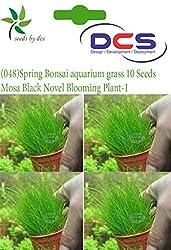 DCS (048) Spring Bonsai aquarium grass 10 Seeds Mosa Black Novel Blooming Plant-1