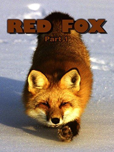 Red Fox: Part 1