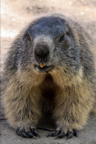 marmot-alpine-rodent-journal-150-page-lined-notebook-diary