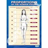 Proportions of the Human Figure Art Educational Wall ChartPoster in laminated paper A1 850mm x 594mm