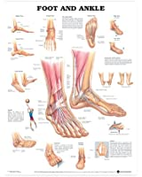 Foot & Ankle Chart: (laminated)