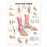 img - for Foot and Ankle Anatomical Chart book / textbook / text book