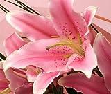 【送料無料】豪華に大輪系ピンク百合の花束 15リン以上 花贈り花工房 エーデルワイス フラワーギフト
