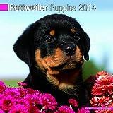 Rottweiler Puppies 2014