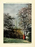 1926 Print Washington D.C. Monument Cherry Blossom Trees Floral Botanical Botany - Original Color Print