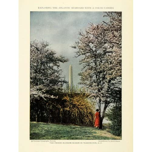 1926 Print Washington D.C. Monument Cherry Blossom Trees Floral Botanical Botany   Original Color Print
