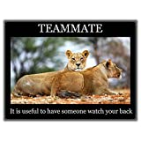 TIA Creation Motivational poster - TEAMMATE 0440 Poster on Matte Photographic Paper 32inch X 24inch