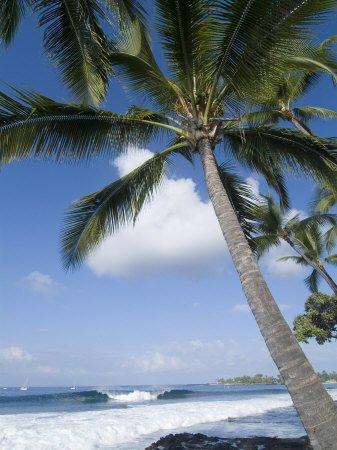 Beach at Kailua-Kona poster