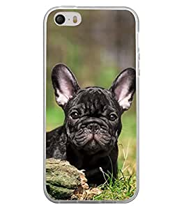 Cute Dog 2D Hard Polycarbonate Designer Back Case Cover for Apple iPhone 4