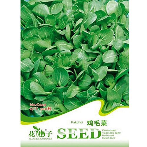 chinese-white-cabbage-seeds-garden-balcony-brassica-chinensis-vegetables-plant-200pcs