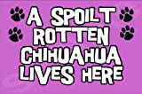 A Spoilt Rotten Chihuahua Lives Here - Dog Puppy Jumbo Magnet Ideal Gift/Present
