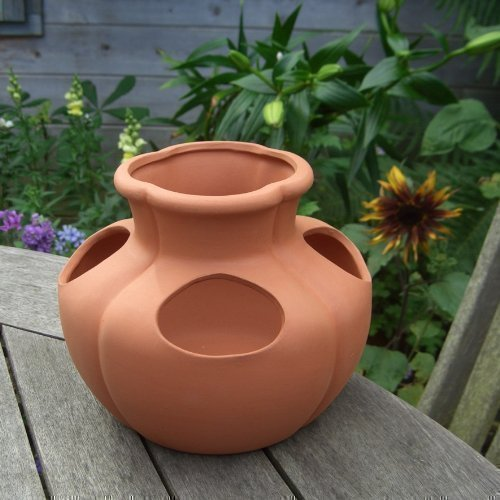 Mini Pot en terre cuite pour fraisiers/herbes (19 x 16 cm