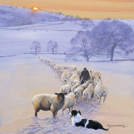 Shepherd's Delight Border Collie & Sheep Christmas Cards Pack