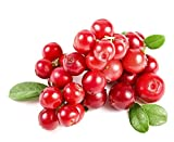 Cranberry Fruit Seeds by National Gardens