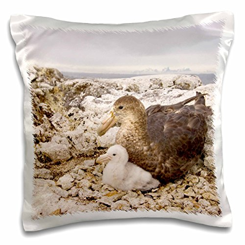Danita Delimont - Wildlife - Southern giant petrel nest, Antarctic Peninsula-AN02 SKA0581 - Steve Kazlowski - 16x16 inch Pillow Case (pc_76224_1)