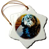 3dRose Orn_64796_1 A Cute Shiatsu Pet Dog On The Seat Of The Truck In The Light Snowflake Porcelain Ornament,...